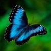 [Jerilor] Tidings of The We... - last post by Blue Morpho